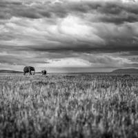 alone on the savanna