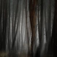 roodkapjes bos