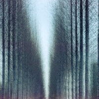 barcode bomen