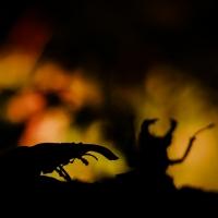 gevaar in het donker