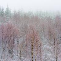 winterberken
