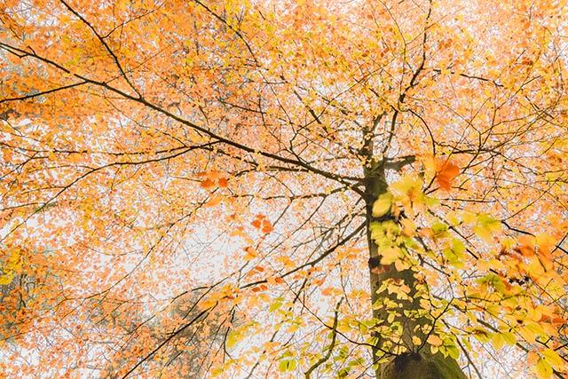 Laatste herfstkleuren