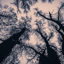 tree,boom,night,nacht,landscape,landschap,nikon,tamron 24-70 g2, mood,sfeer, dark, donker, boomtop,tree top, takken,branches, jowan iven, mysterious, mysterieus, tripod, statief, laarbeek, groene long, beek en donk, cloudy weather, bewolkt,