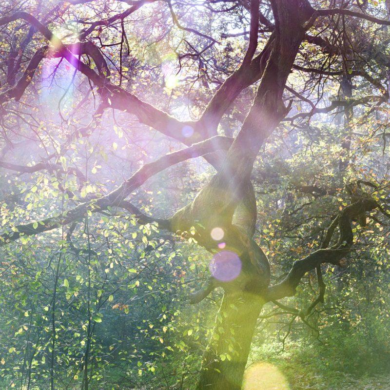 Bewogen door Bomen