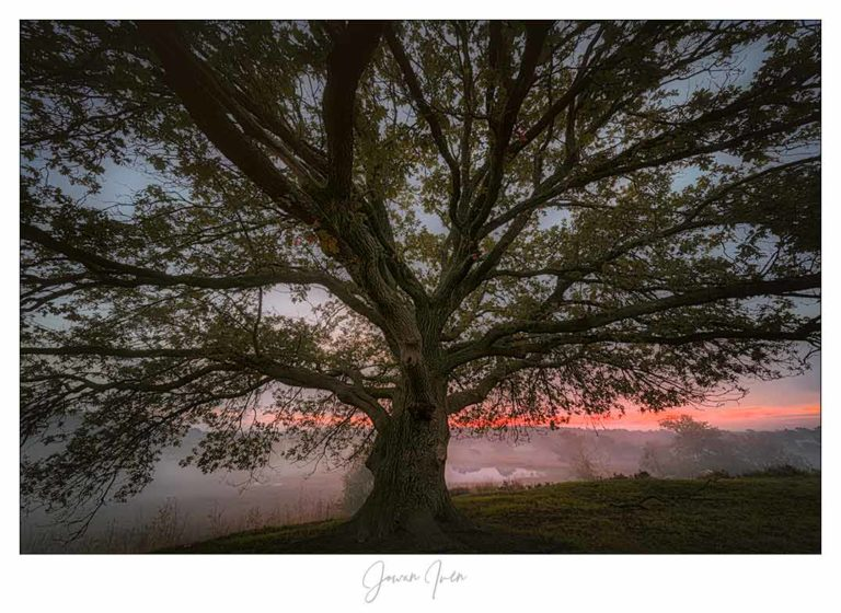 Bomenfotografie